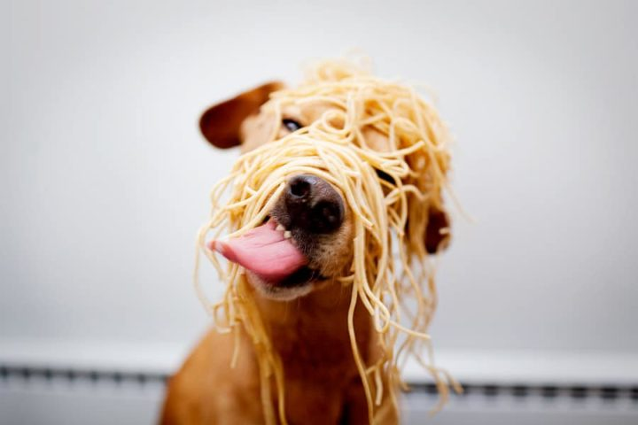 messy URL structure is like a dog eating spaghetti