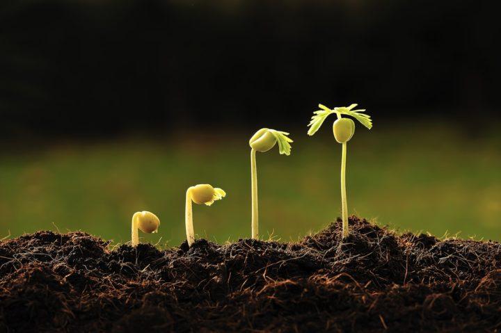 SEO Business Growth
